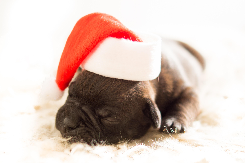 Holiday Pet Safety Tips Las Vegas Nevada